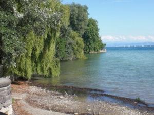 Bodensee-Ufer