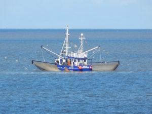 Krabbenfischer vor Cuxhaven