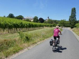 Radeln im Rheingau
